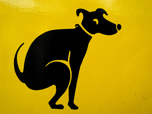 I bisognini di un border collie border collie consigli for Cani che non vogliono fare il bagno